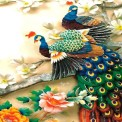Colorful Peacock Live Wallpaper